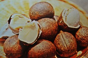 Nueces caldereñas. Fuente: Libro Frutales de Venezuela. Jesús Hoyos