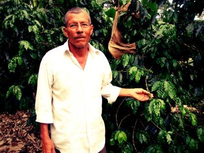 Anselmo Berrios, caficultor.